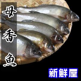 宜蘭有卵香魚 ^(1Kg  7尾裝 盒 ^)~新鮮屋~