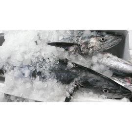 澎湖土魠鱼(全鱼分切)-花格海味海鲜直送