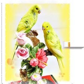 ~事事洞燭先機~實心 雙色鸚鵡擺件木座 玻璃框∼ 製∼