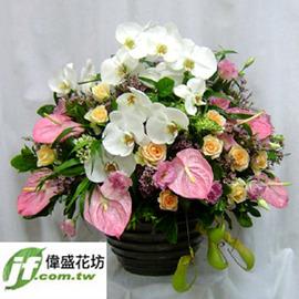 娇颜  盆花