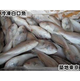 冷凍白口魚,規格:120 150,10KG 箱