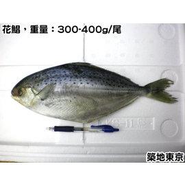 ~築地東京~~冷凍花鯧魚,規格:300~400g 尾,數量:1尾 包~