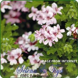 舒亞~玫瑰天竺葵純露 德國 Geranium Rose floral waters~120