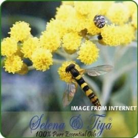 舒亞~永久花^(蠟菊^)純露^(德國^)Immortelle ^(Helichrysum^