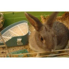 寵物兔寄宿服務