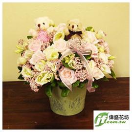 粉嫩小熊 盆花