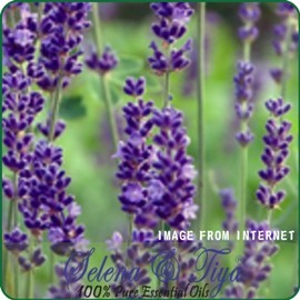 舒亞~普羅真正薰衣草^(法國^)Lavender Oil Population~10ml