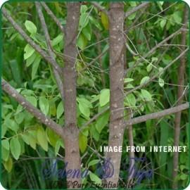 舒亞~東印度檀香 印度 Sandalwood Oil E.Indian~10ml