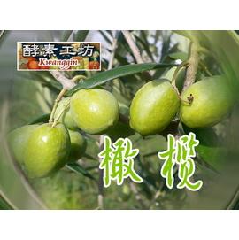 ~酵素工坊~橄欖酵素原液 / 酵素液