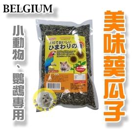 BELGIUM小粒葵花子580g╱ 小動物葵瓜子~鳥類、鼠類亦可食用^(BE~121^)