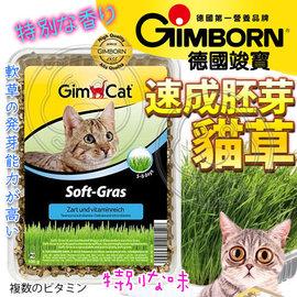 德國GIMPET駿寶香味軟貓草100g ^(盒裝^)