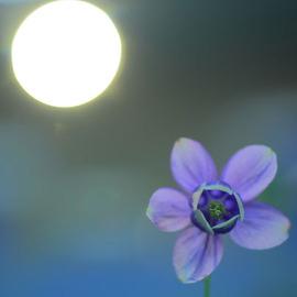 每月護持~和上弘法網站.網站空間主機租用~弘法功德~~自性地藏滿願母錢~與您結緣!