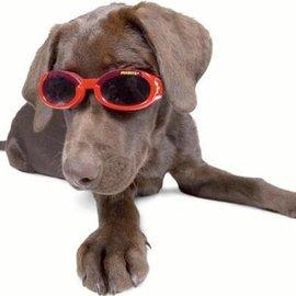 ~X~DOGZ寵物 ~Doggles ILS 太陽眼鏡 黑色