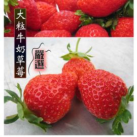 大粒牛奶草莓(2公斤)