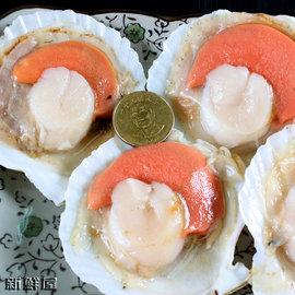 扇貝 半殼 約13^~15顆 包X3包 烤海鮮怎能少了這味^!~新鮮屋~
