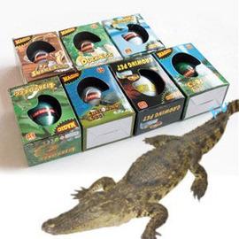 重回侏羅紀 恐龍孵化蛋 孵化蛋  ◇/孵化恐龍蛋/長大蛋魔術蛋水孵蛋侏羅紀世界公園【禮品皇后】