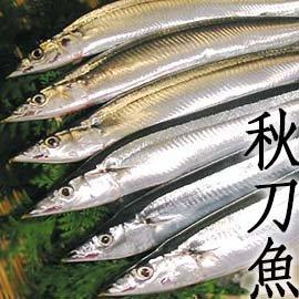 ㊣盅龐水產 ~秋刀魚^(10入^)~ 10隻入 190元 平均 19元一隻 特大號. 最鮮