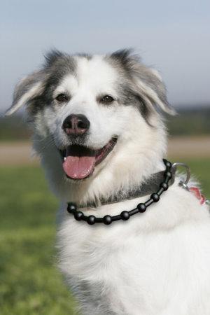 dogblack