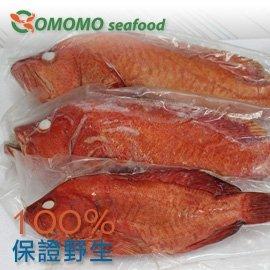 ~Comomo 天然野生海魚~野生磯釣紅石斑 真空包裝全魚 335公克 ^(90元 100