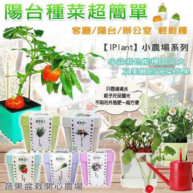 I Plant 小農場 組合A(萵苣+九層塔+空心菜+青蔥+辣椒+香菜)6入組 圖示介紹1