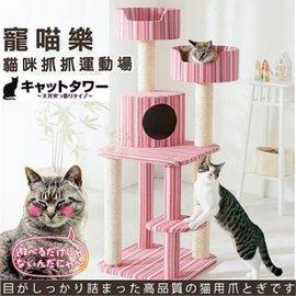 ~GOLD~~活動價含運~~寵喵樂~ 可愛夏日粉色貓咪貓跳台 貓樂園 AM503  粉條紋