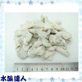 【水族達人】《散裝珊瑚砂1kg.30~60mm》珊瑚骨/造景的好幫手!