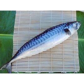 ~漁味屋~挪威鯖魚 10kg  箱