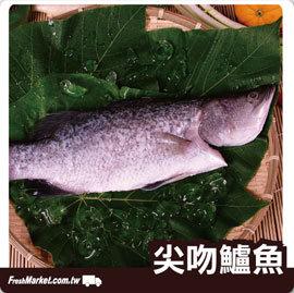 ~新鮮市集  樂活鮮美家~尖吻鱸魚450g±50g 尾~ 好媳婦的 拍檔,營養鮮魚湯的 食