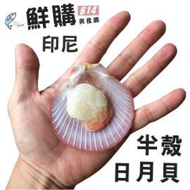 ~鮮購614美食網~印尼半殼日月貝,500克 包,每包40~50顆