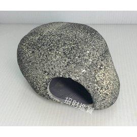 XL 慈鯛 石頭 兩棲 爬蟲 守宮 蜥蜴 蛇 洞穴 產卵 繁殖 躲藏 過濾 裝飾 造景 底