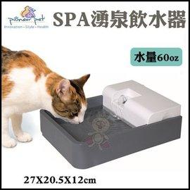 ~GOLD~Pioneer Pet SPA 湧泉飲水器 ^(D166^)