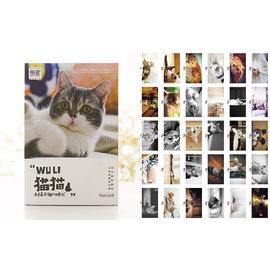貓貓明信片 主題明信片 明信片 貼上郵票可郵寄