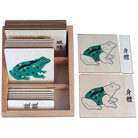 3~6歲蒙特梭利語文教具:動物部分名稱三段卡:青蛙(國字,含盒)