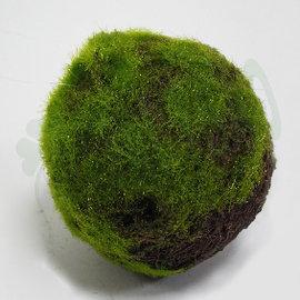 ~ 造花~ ~人造植物~^~150mm Moss球^~~仿真15cm青苔苔蘚毛草球 空間裝