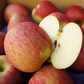 ~築地一番鮮~特大智利富士蘋果1盒 2.5kg  7~9顆