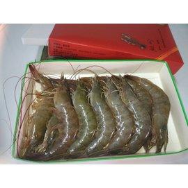 自然家無藥新鮮中號白蝦1250公克