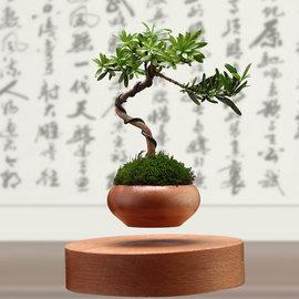 5Cgo ~ 七天交貨~ 531139021587 飄浮磁懸浮盆栽空中盆景DIY植物實木擺