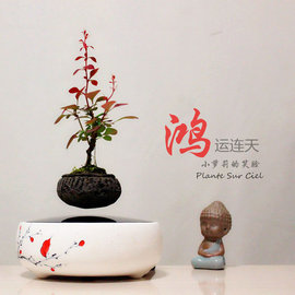 5Cgo ~ 七天交貨~526608564631 多肉植物磁懸浮盆栽辦公室內擺件diy植物