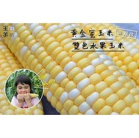 拆封即食!超甜~黃金蜜玉米、雙色水果玉米~真空包 各4入 組 ^(非基改品種^)