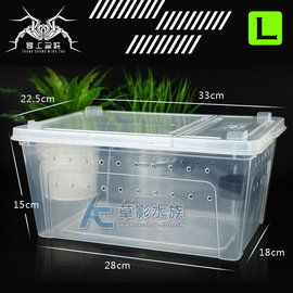 ~AC草影~掌上名蛛 爬蟲飼養盒 附水盆(L)~一個~