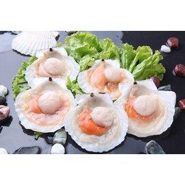 む心馳食品め半殼扇貝1包(500g 5入 包)