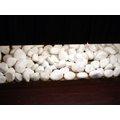 純粹石材~特白石20kg~150元^(漢白玉、小白石、白卵石、鵝卵石^)