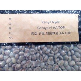 7026肯亞 冽里 加圖雅尼 AA TOP生豆一公斤