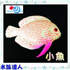 【水族達人】【造景裝飾】水世界AQUA WORLD《small fish  螢光小魚 G-083-D》裝飾