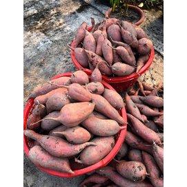 ~鄒頌~20斤~無毒~黃金^(紅心^)地瓜~~沒有農藥~~10斤~