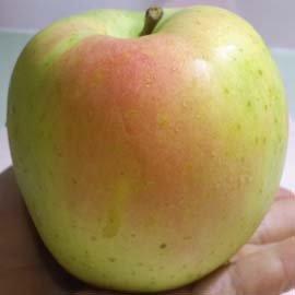 ~財寶水果~ 水果老店 第 自創品牌~ 青森TOKI水蜜桃蘋果每盒6顆入 兼具青蘋果的脆與