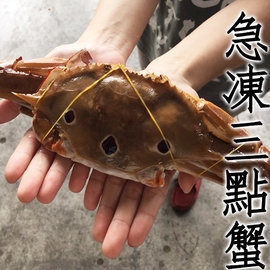 ㊣盅龐水產 ~200 300三點蟹~螃蟹 花蟹 零 106元 隻 秋蟹 餐廳