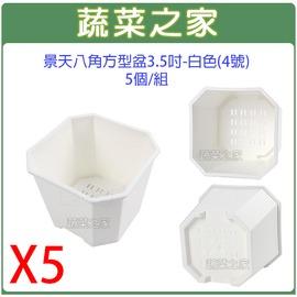 【蔬菜之家005-D117-WI5】景天八角方型盆3.5吋-白色(4号)5个/组