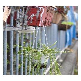 6寸(18cm)储水型白吊盆(含吊绳、水盘)