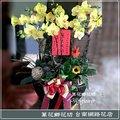 H027  黃色蝴蝶蘭 蘭花盆景 台南市花店
